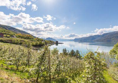 Bløming_03-kreditering-VisitHardangerfjord web